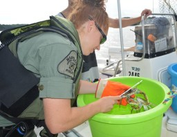 A female NRP officer measuring crabs