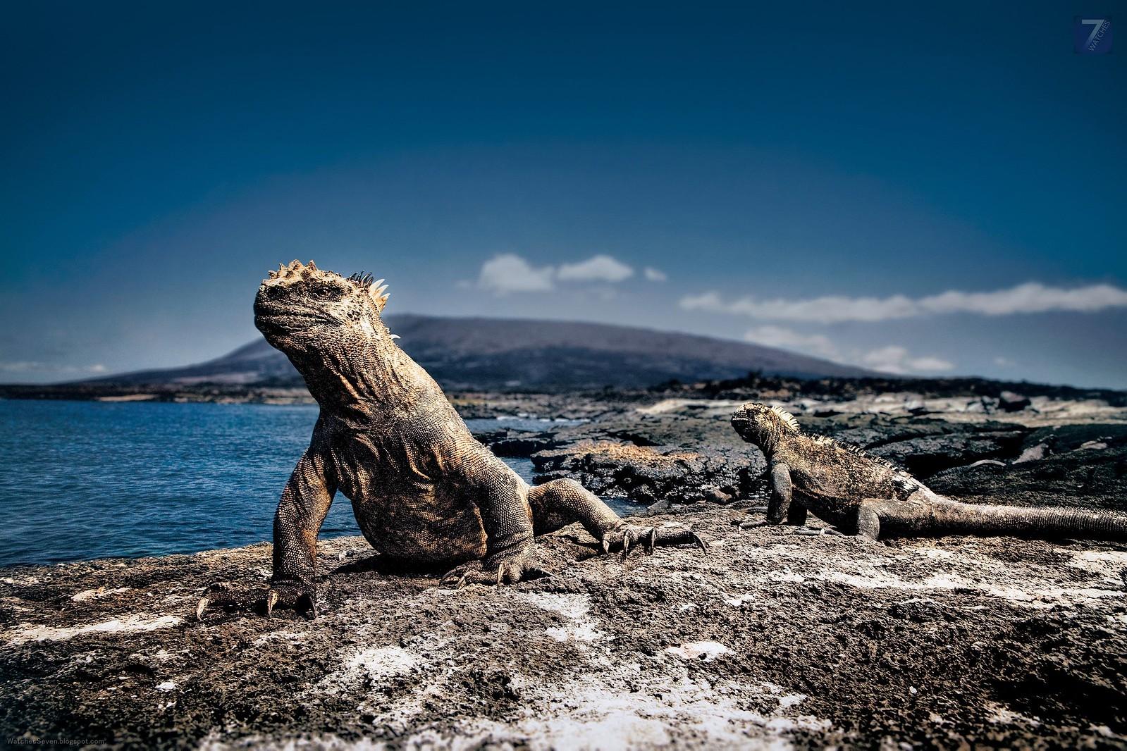 Darwin Beagle Galapagos