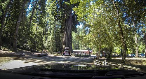 Coastal Redwoods and Fog-036