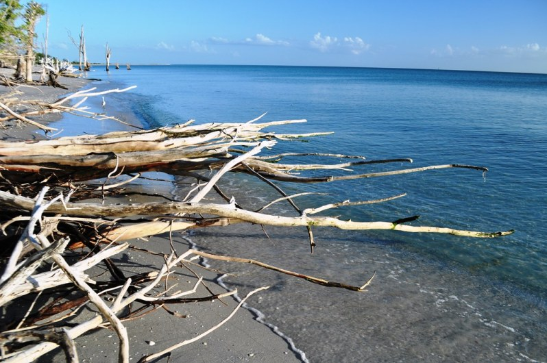 Check it Out! Waves Rolling Under the Tree Roots.  On a Tuesday. Stump Pass Beach State Park, Manasota Key, Englewood, Fla., Aug. 26, 2014