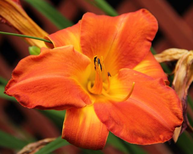 20140629_Flowers_002