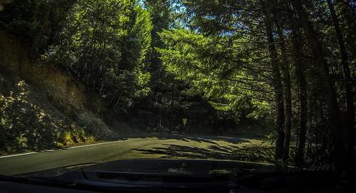 Coastal Redwoods and Fog-061