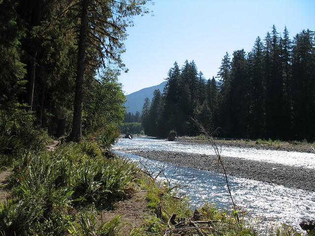 Looking Up The Hoh River