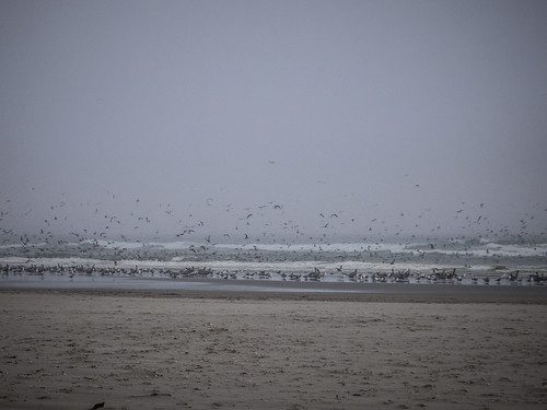 Shore Birds at Long Beach