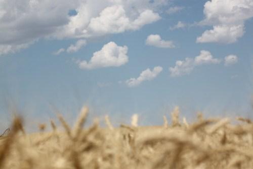 Beautiful harvest sky.