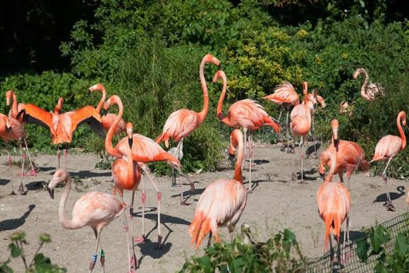 Zoo In Czech (7/20/14)