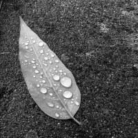 1030 - Rainy wine country