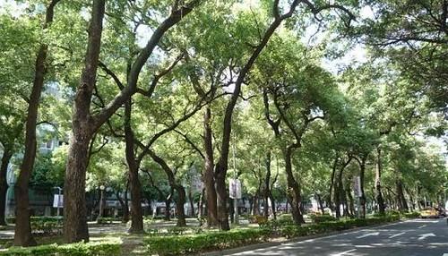 樹木不保? | 臺灣環境資訊協會-環境資訊中心