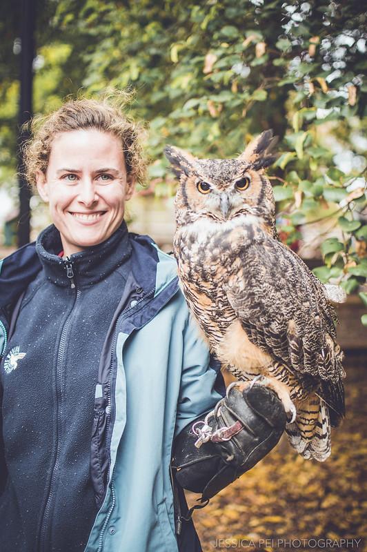 owl horned brown bird grant's farm