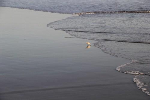 20141013_Huntington_Beach_002