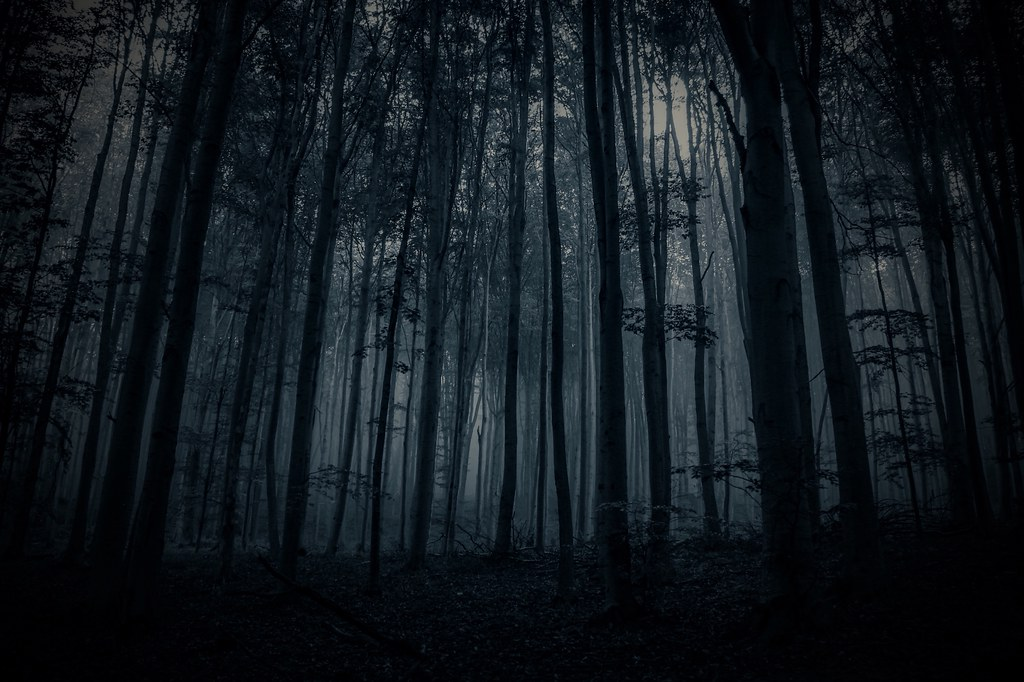 Wallpaper Black Dark Dark Forest Sidewalk Diary Flickr