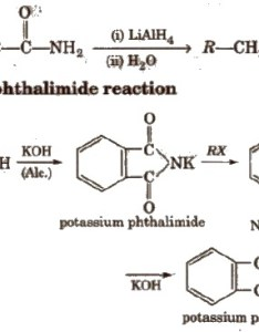 Amines also cbse class chemistry notes aglasem schools rh schoolslasem