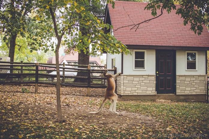 kangaroo hop grant's farm dance funny
