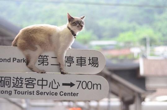 是不想下來還是下不來?   Houtong Cat Village