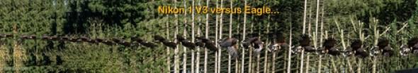 Eagle versus Nikon 1 V3