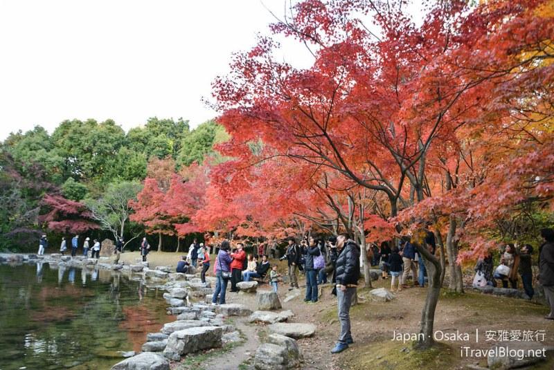 大阪赏枫 万博纪念公园 红叶庭园 13