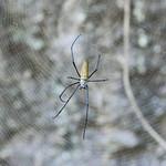 02 Viajefilos en Australia, Kakadu NP 035