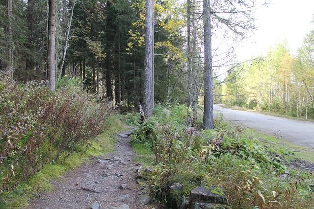trail beside road cascade du dard chamonix