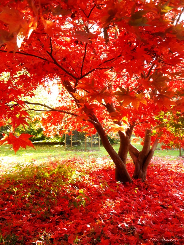 Autumn at the Harcourt arboretum @ www.alittleadventure.net