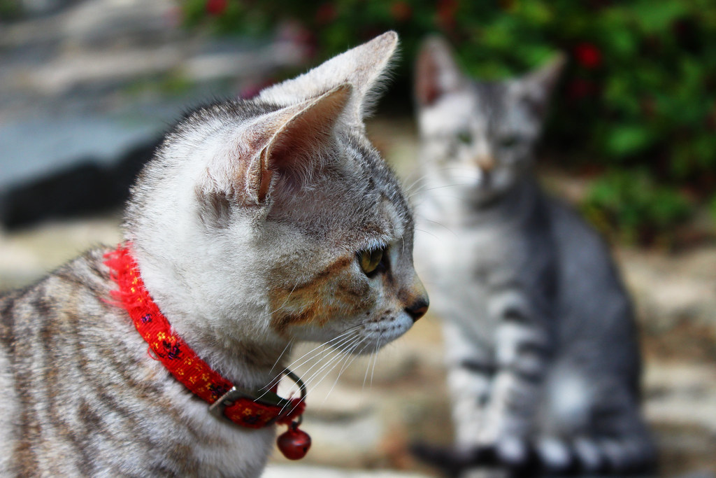 Imagen gratis de un gato gris de perfil
