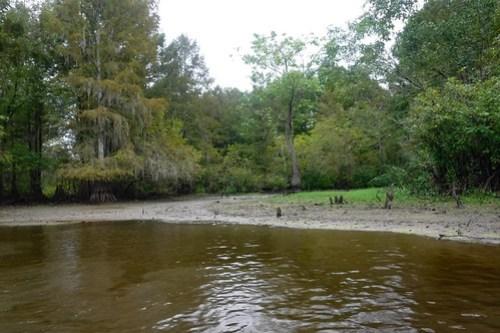 Sparkleberry Swamp with LCU-50