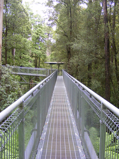 Picture from OTway Fly Tree Top Walk