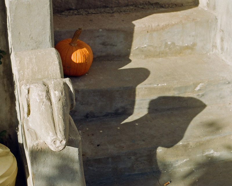 Dog pumpkin shadow