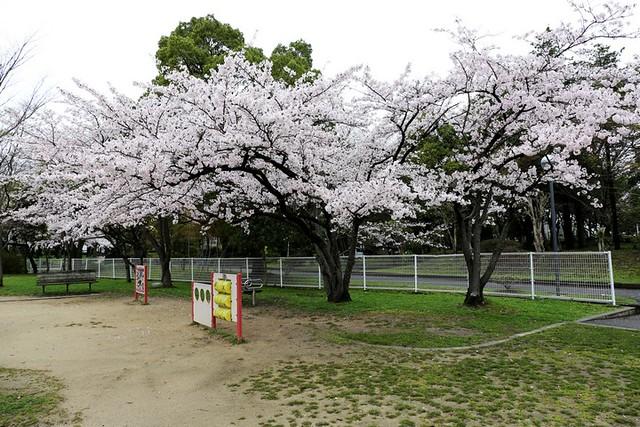 14 日本關西櫻花之旅_Day5_長濱城 @ 阿狗的玩樂網誌 :: 痞客邦