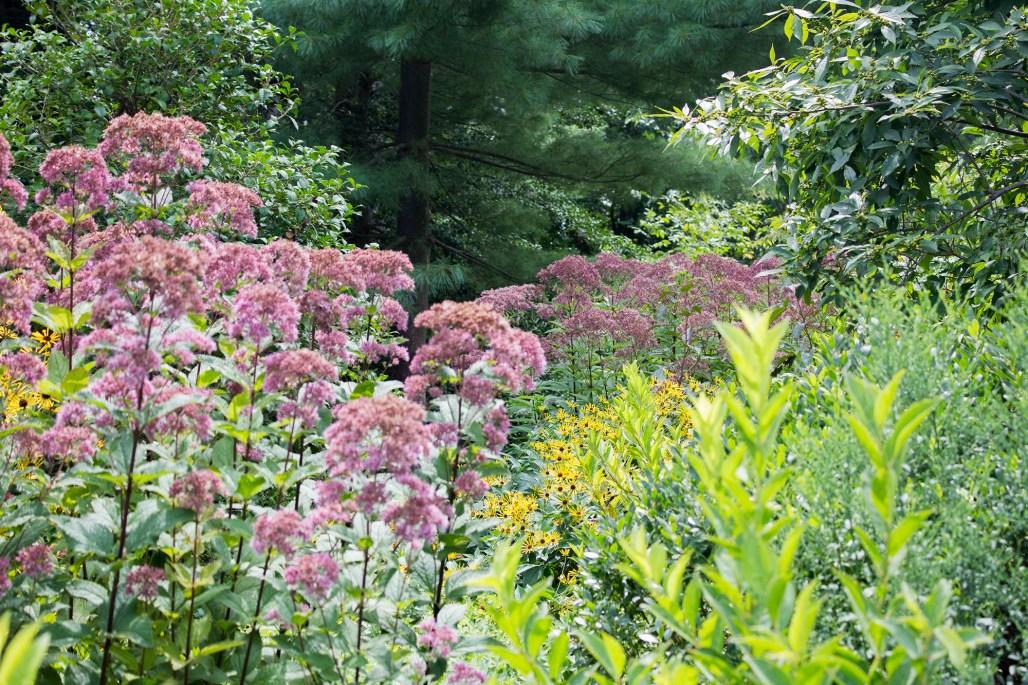 mt-cuba-gardens-delaware-wildflowers