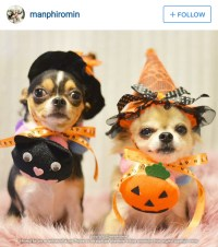 Who's not scary? These 10 cute Halloween dogs in costume ...