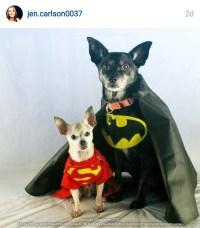 Dog Costumes Batman And Robin