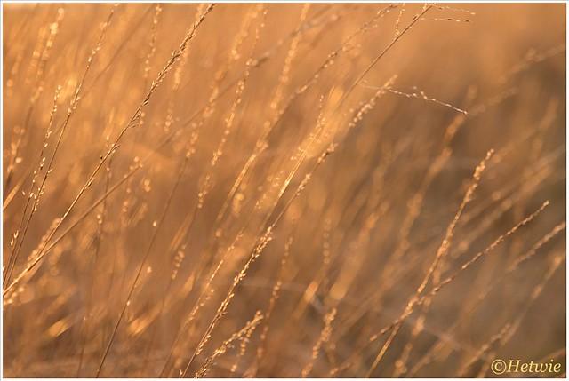 Zonlicht in het gras (HP001116)