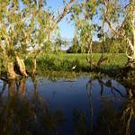 02 Viajefilos en Australia, Kakadu NP 091