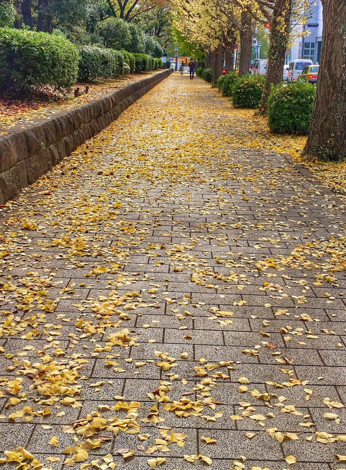 HDR Autumn snaps near National Diet Building in Tokyo. Kokkai Gijidou