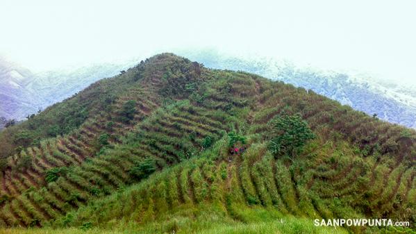Mount Ayaas
