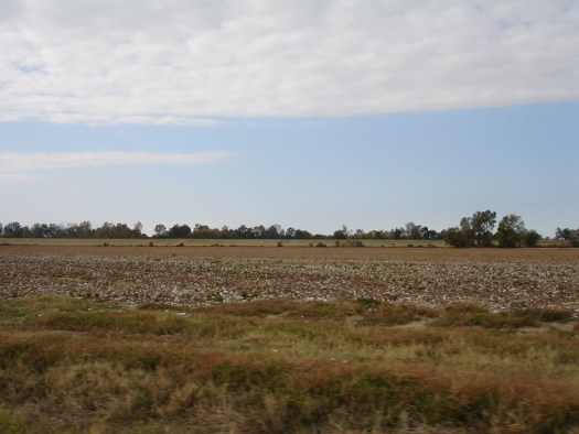 Cotton field at Doro Plantation