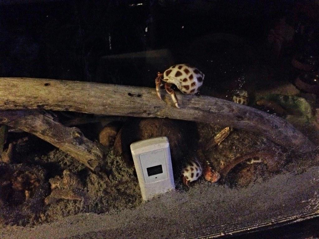 Hermit Crab Habitat - Crabitat