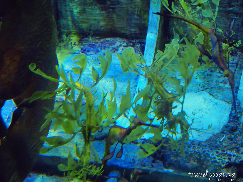 travel.joogo.sg - SEA Aquarium 18
