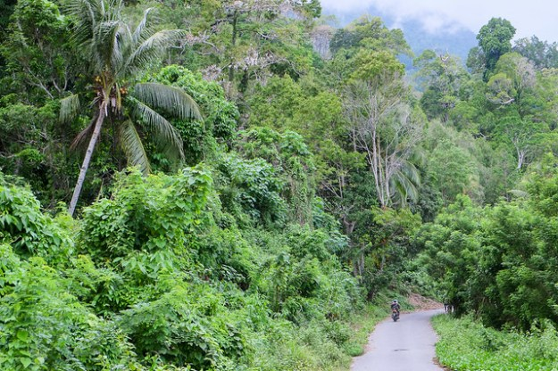 Jungle road near Sawai