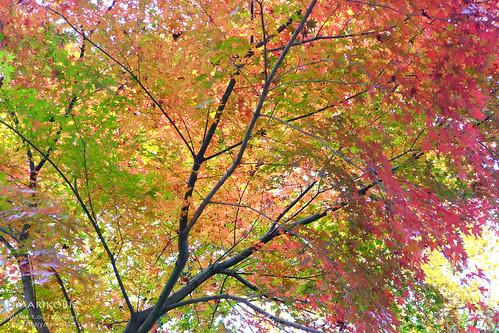 鎌北湖 20151210-DSCF8983