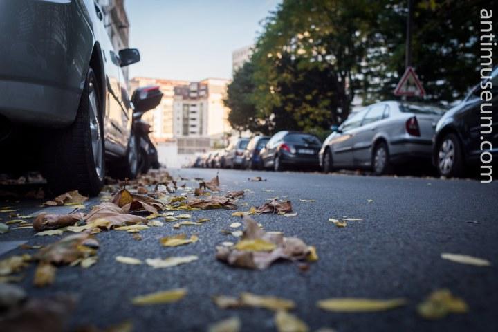 16-autumn-30102016-5468.jpg