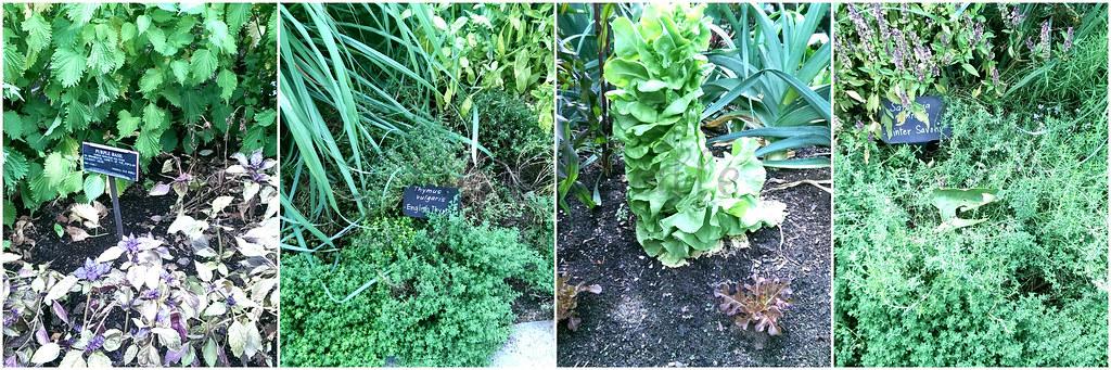 Herb Vegetable -edit