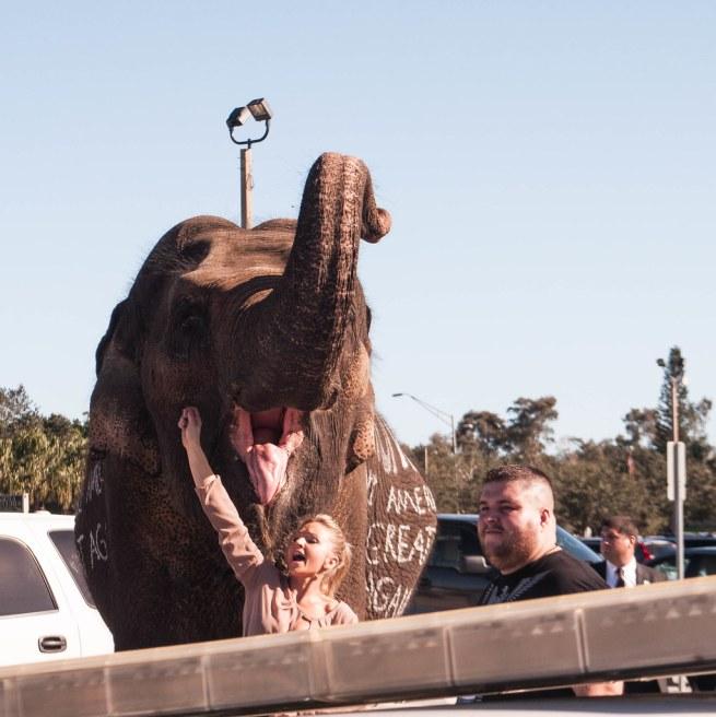 Yes, an Elephant. Donald J. Trump for President Rally in Sarasota, Fla., Nov. 28, 2015
