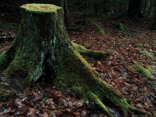 Green Stump