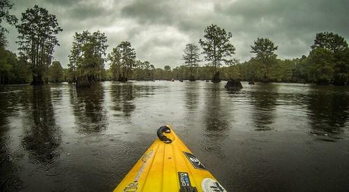 Sparkleberry Swamp with LCU-201