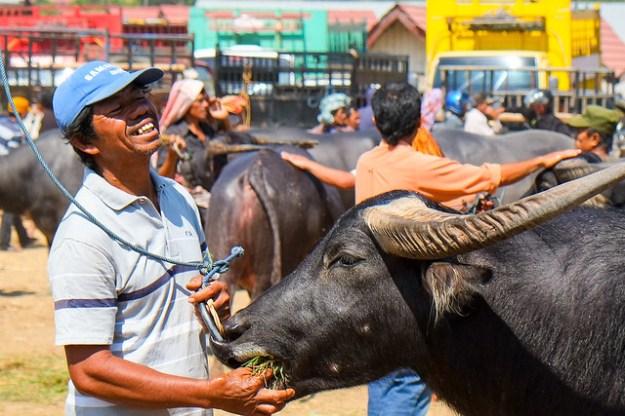 Bolu Market. Rantepao