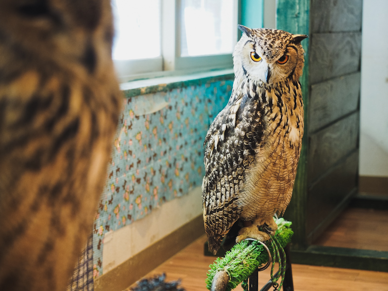 Lucky-Owl-Cafe-Osaka-7
