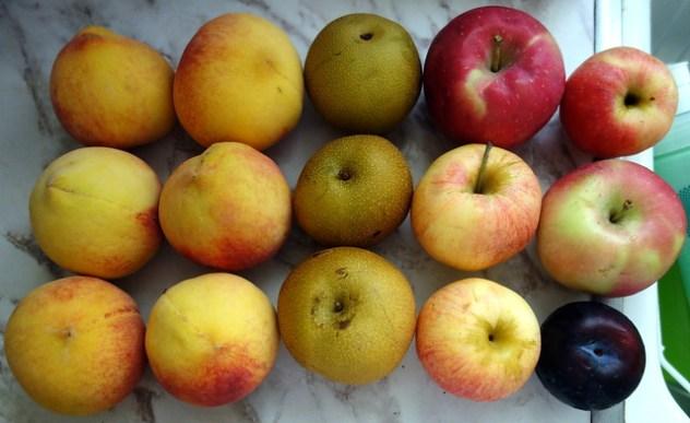 Homestead Creamery Week 10 Fruit Delivery