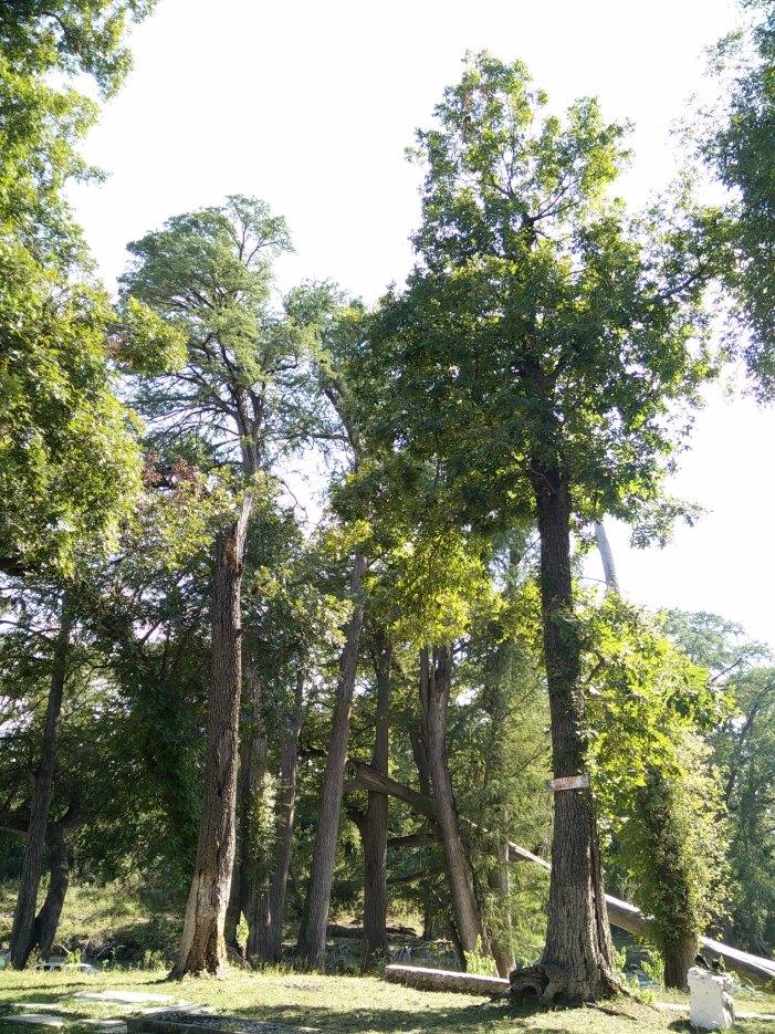 arboles vertical