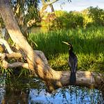 02 Viajefilos en Australia, Kakadu NP 092